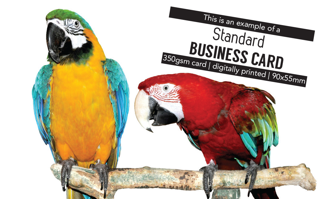 Business card printing auckland nz print plus standard our most cost effective business card reheart Choice Image
